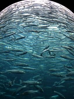 En nuestros viajes de buceo podrás identificar peces